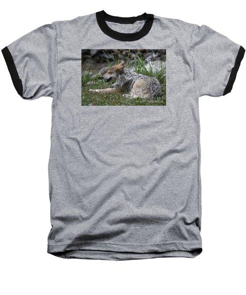 Mexican Wolf 20120714_112a Baseball T-Shirt