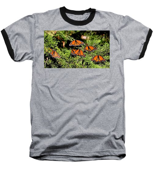 Baseball T-Shirt featuring the photograph Migrating Monarchs by AJ Schibig