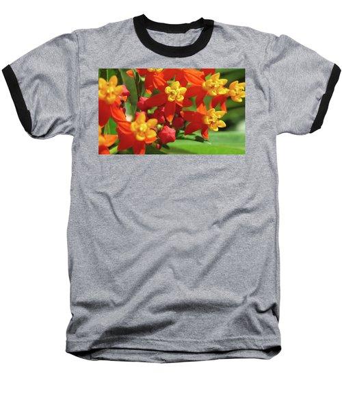 Milkweed Flowers Baseball T-Shirt by Melinda Saminski