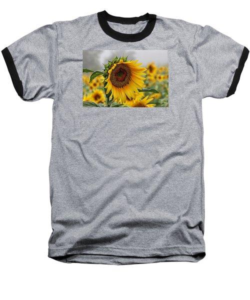 Misty Morning Sunflower Baseball T-Shirt by Karen McKenzie McAdoo