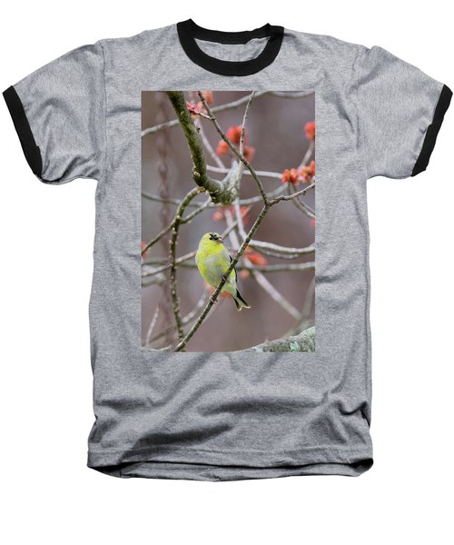 Baseball T-Shirt featuring the photograph Molting Gold Finch by Bill Wakeley