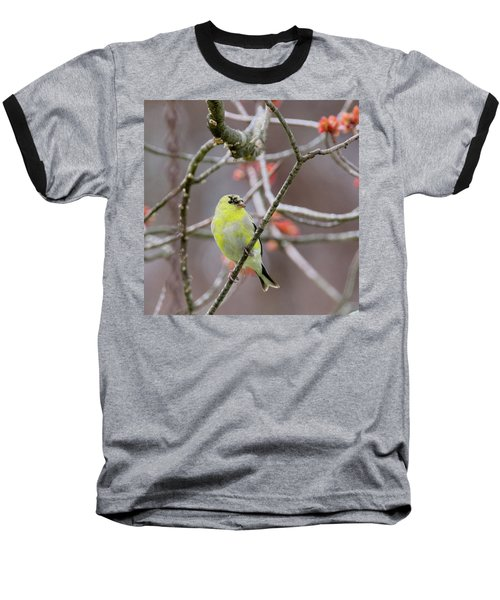 Baseball T-Shirt featuring the photograph Molting Gold Finch Square by Bill Wakeley