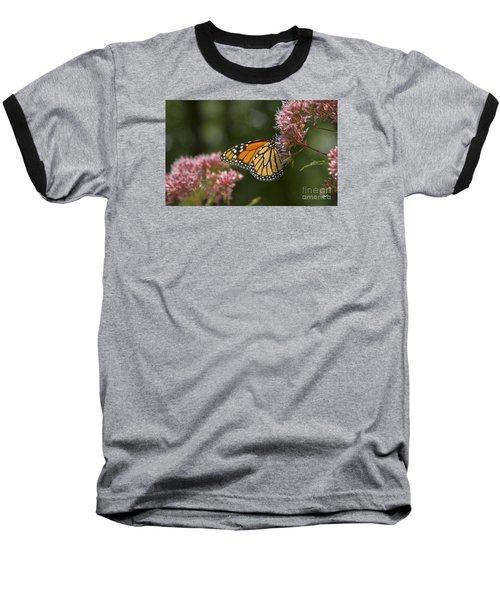Monarch Butterfly Baseball T-Shirt by Alana Ranney
