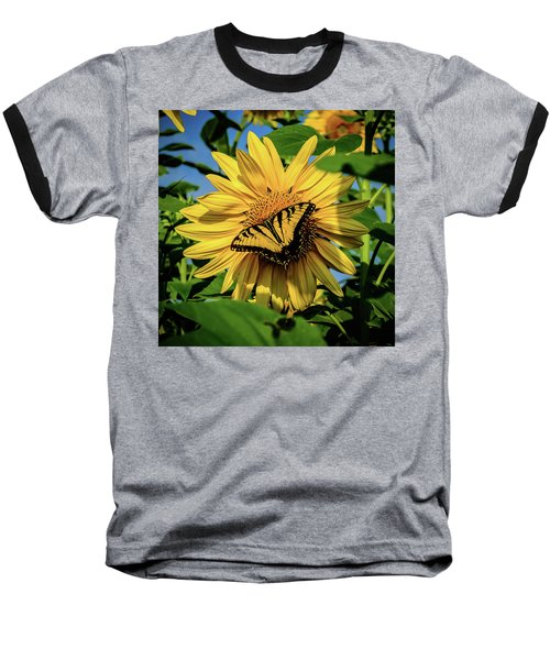 Male Eastern Tiger Swallowtail - Papilio Glaucus And Sunflower Baseball T-Shirt