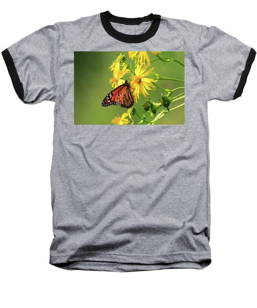 Monarch Butterfly Baseball T-Shirt by Gary Hall