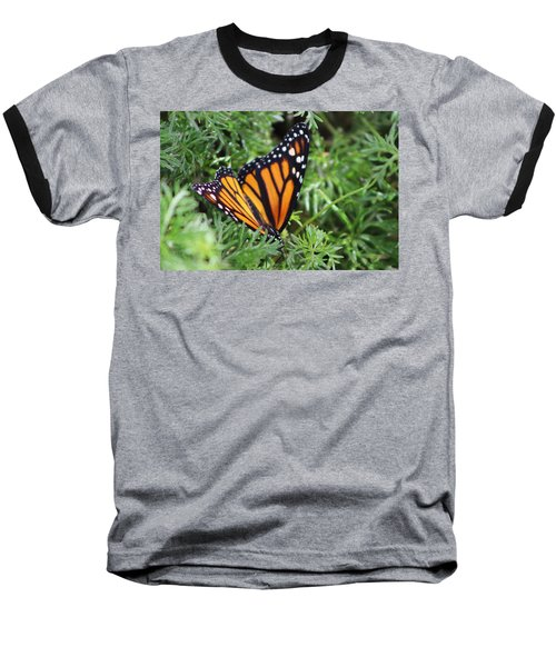 Monarch Butterfly In Lush Leaves Baseball T-Shirt