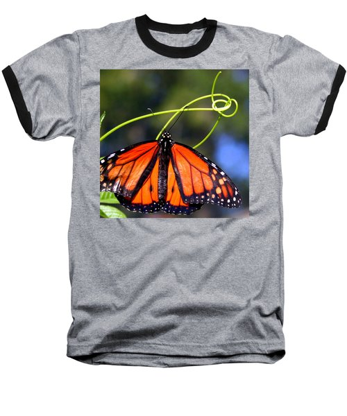 Monarch Butterfly Baseball T-Shirt by Laurel Talabere