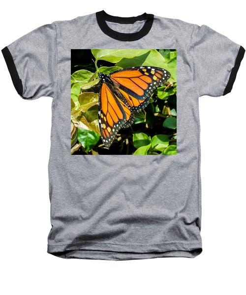 Monarch Baseball T-Shirt by Mark Barclay