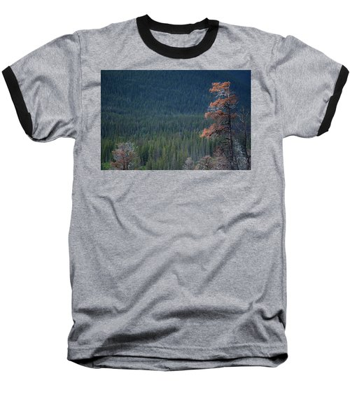 Montana Tree Line Baseball T-Shirt