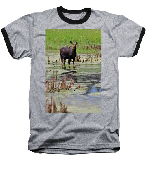 Moose Enjoying Dinner Baseball T-Shirt