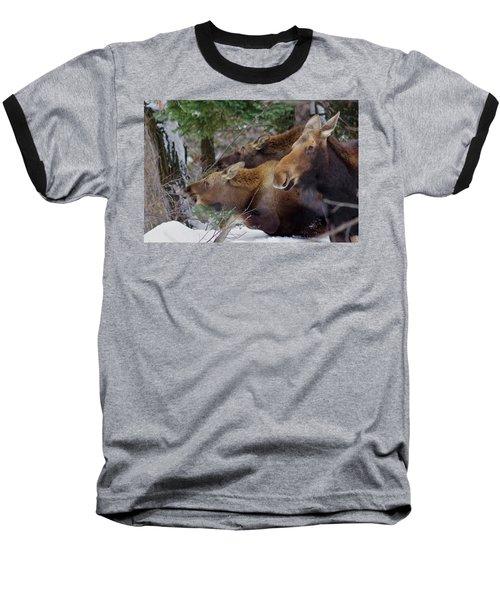 Moose Family Lunch Baseball T-Shirt