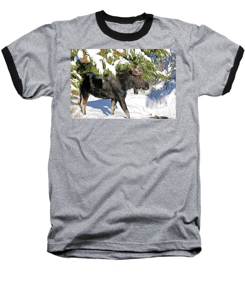 Moose In Snow Baseball T-Shirt