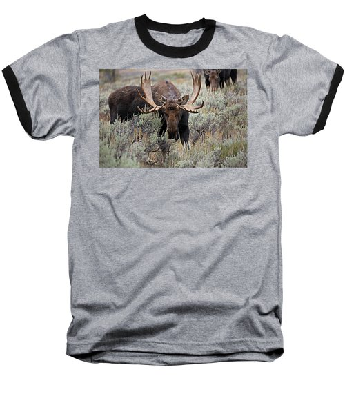 Moose In The Sage Baseball T-Shirt