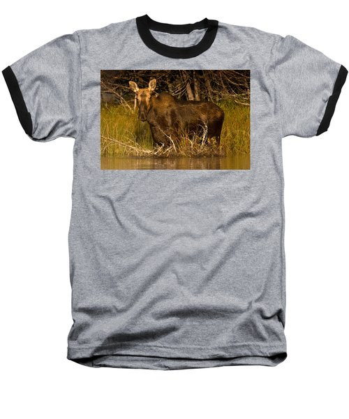 Moose Of Prong Pond Baseball T-Shirt by Brent L Ander