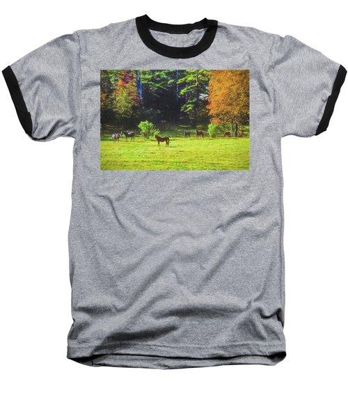 Morgan Horses In Autumn Pasture Baseball T-Shirt