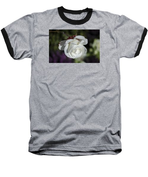 Morning Rose Baseball T-Shirt by Dan Hefle