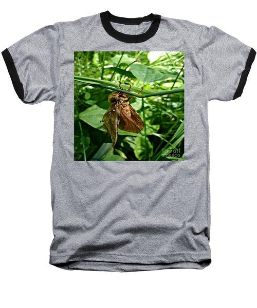 Moth At Rest Baseball T-Shirt