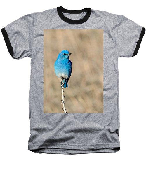 Mountain Bluebird On A Stem. Baseball T-Shirt