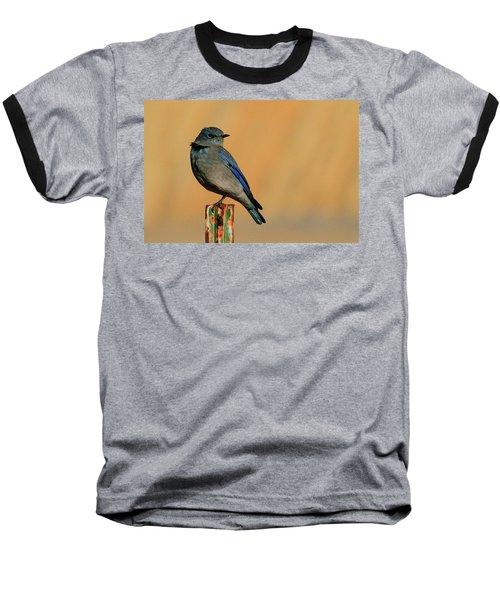 Mountain Bluebird Baseball T-Shirt by Paul Marto
