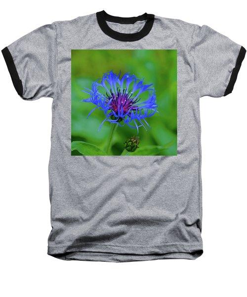 Mountain Cornflower Baseball T-Shirt by Byron Varvarigos
