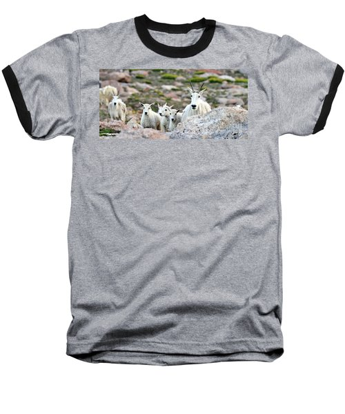Baseball T-Shirt featuring the photograph Mountain Goat Family Panorama by Scott Mahon