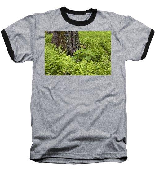 Mountain Green Ferns Baseball T-Shirt