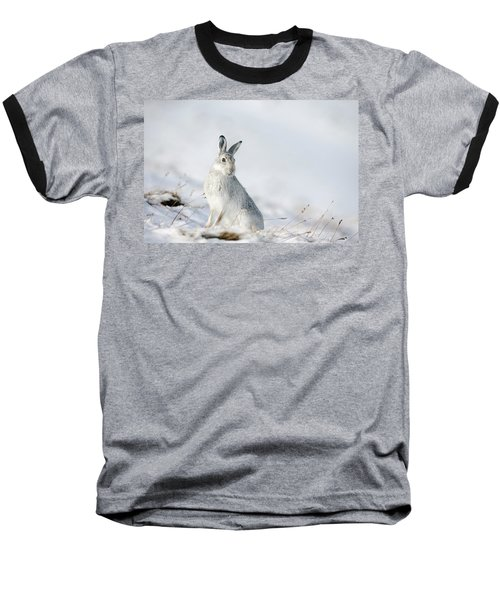 Mountain Hare Sitting In Snow Baseball T-Shirt
