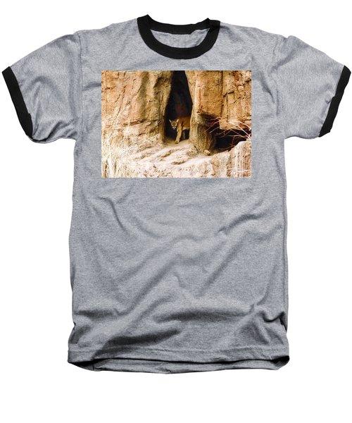 Mountain Lion In The Desert Baseball T-Shirt