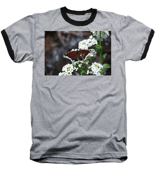 Mourning Cloak Baseball T-Shirt by Jason Coward