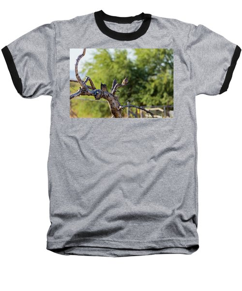 Mourning Dove In Old Tree Baseball T-Shirt