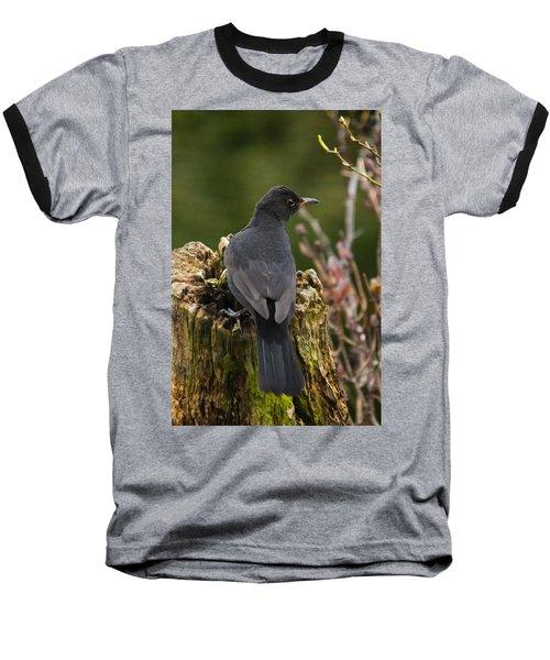 Mr Birdy Baseball T-Shirt