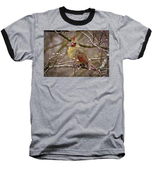 Baseball T-Shirt featuring the photograph Mrs Cardinal by Douglas Stucky