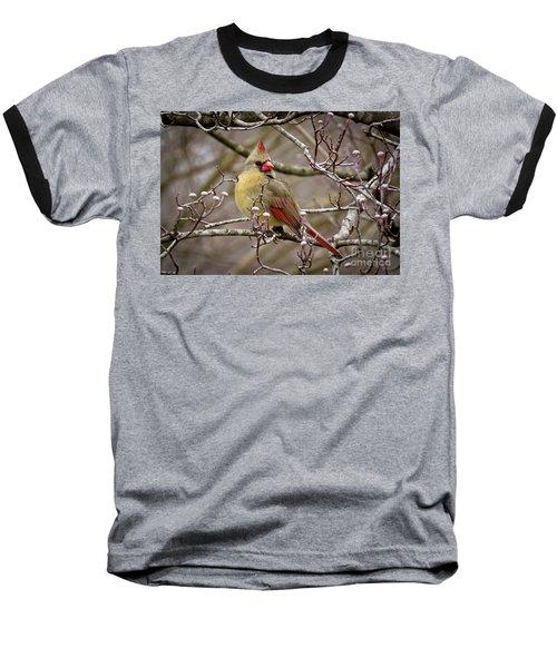 Baseball T-Shirt featuring the photograph Mrs Cardinal II by Douglas Stucky