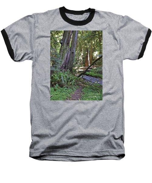 Muir Woods Beauty Baseball T-Shirt