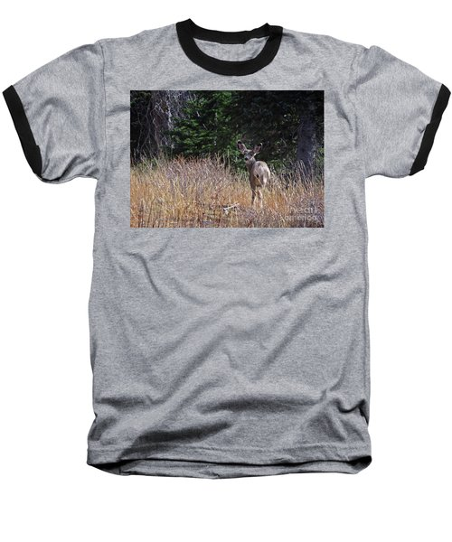 Mule Deer In Utah Baseball T-Shirt by Cindy Murphy - NightVisions