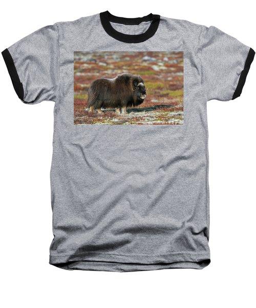 Muskox Baseball T-Shirt