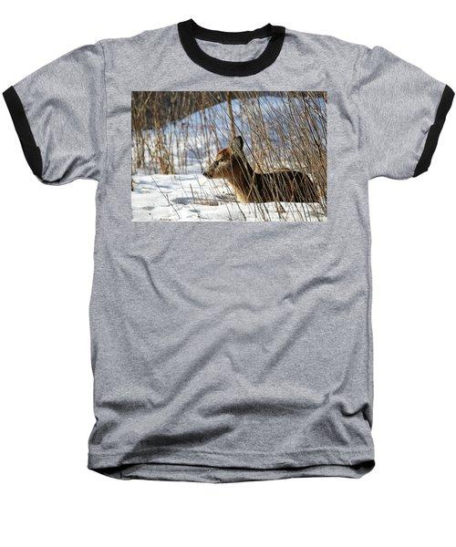 Napping Fawn Baseball T-Shirt by Brook Burling