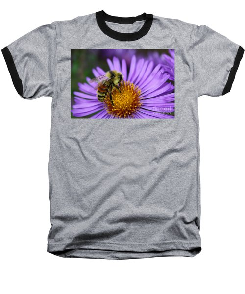 New England Aster And Bee Baseball T-Shirt by Steve Augustin