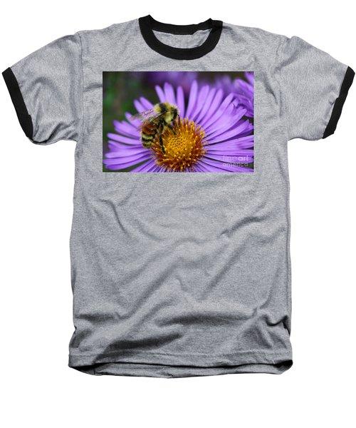 New England Aster And Bee Baseball T-Shirt