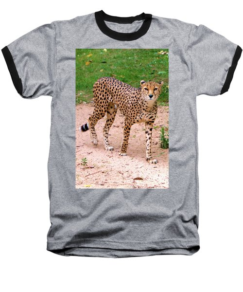 North African Cheetah Baseball T-Shirt