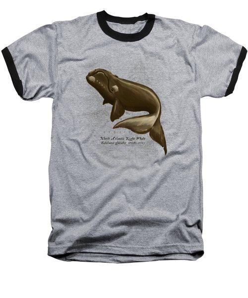 North Atlantic Right Whale Baseball T-Shirt by Amber Marine