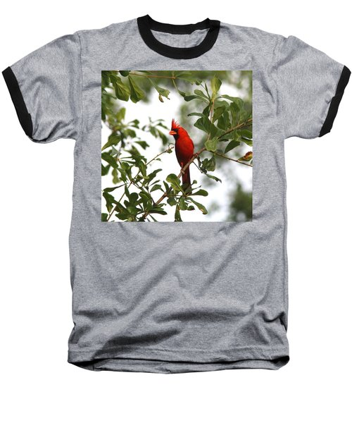 Northern Cardinal - In The Wind Baseball T-Shirt by Travis Truelove