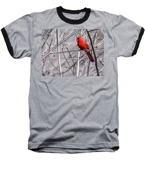 Baseball T-Shirt featuring the photograph Northern Cardinal Feeding by Edward Peterson