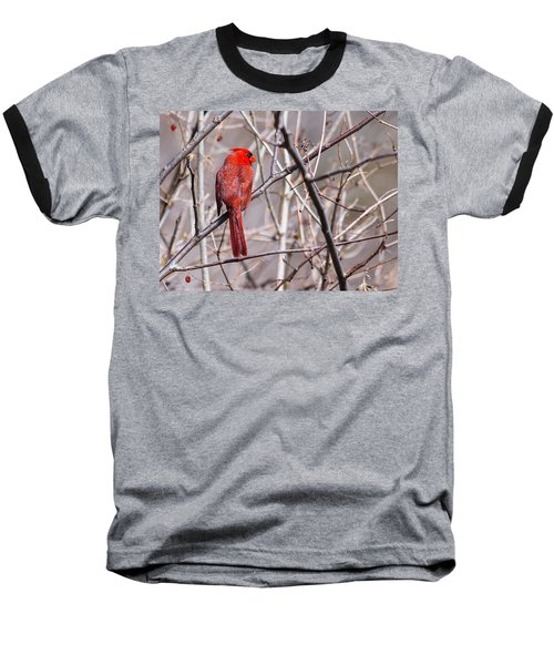Baseball T-Shirt featuring the photograph Northern Cardinal In The Sun by Edward Peterson