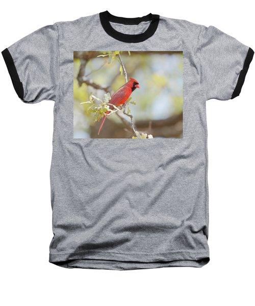 Northern Cardinal Baseball T-Shirt