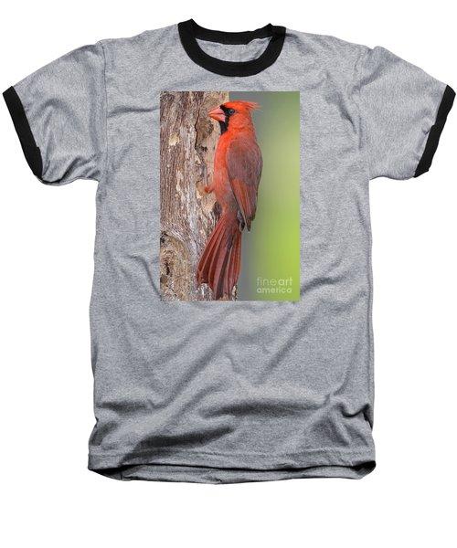 Northern Cardinal Male Baseball T-Shirt by Bonnie Barry