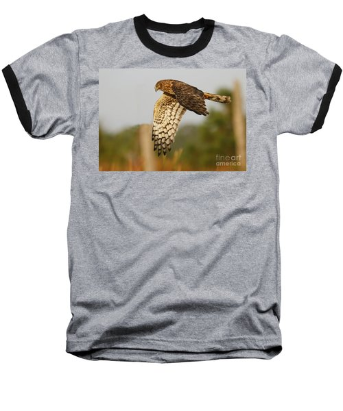 Northern Harrier Flight Baseball T-Shirt by Myrna Bradshaw