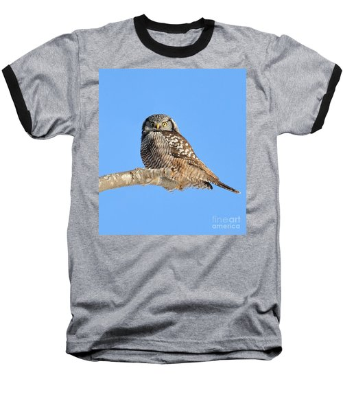 Northern Hawk-owl On Limb Baseball T-Shirt by Debbie Stahre
