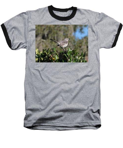 Northern Mockingbird Baseball T-Shirt by Carol Groenen