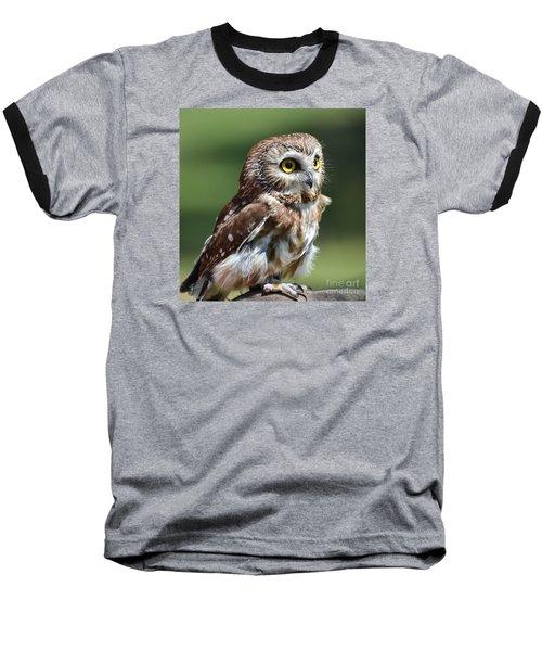 Northern Saw Whet Owl Baseball T-Shirt by Amy Porter